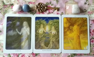 Tree Angel Oracle Card Reading